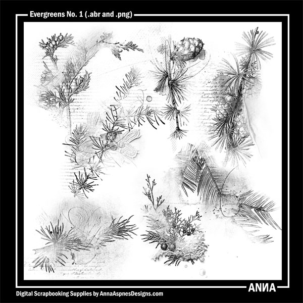 AASPN_Evergreens1